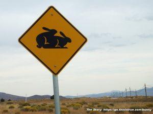Moonlite Bunny Ranch