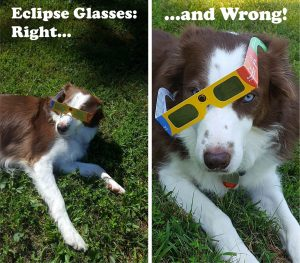 eclipse glasses 300x263 - What to Look for During the 2017 Solar Eclipse