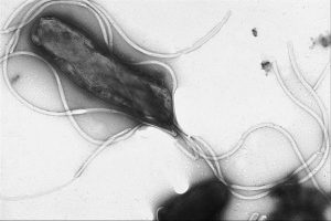 """h pylori 300x200 - 089: The Deserved Death of """"Doctor Knows Best"""""""
